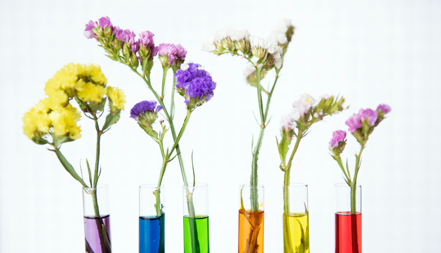 Flowers in vases with colored water